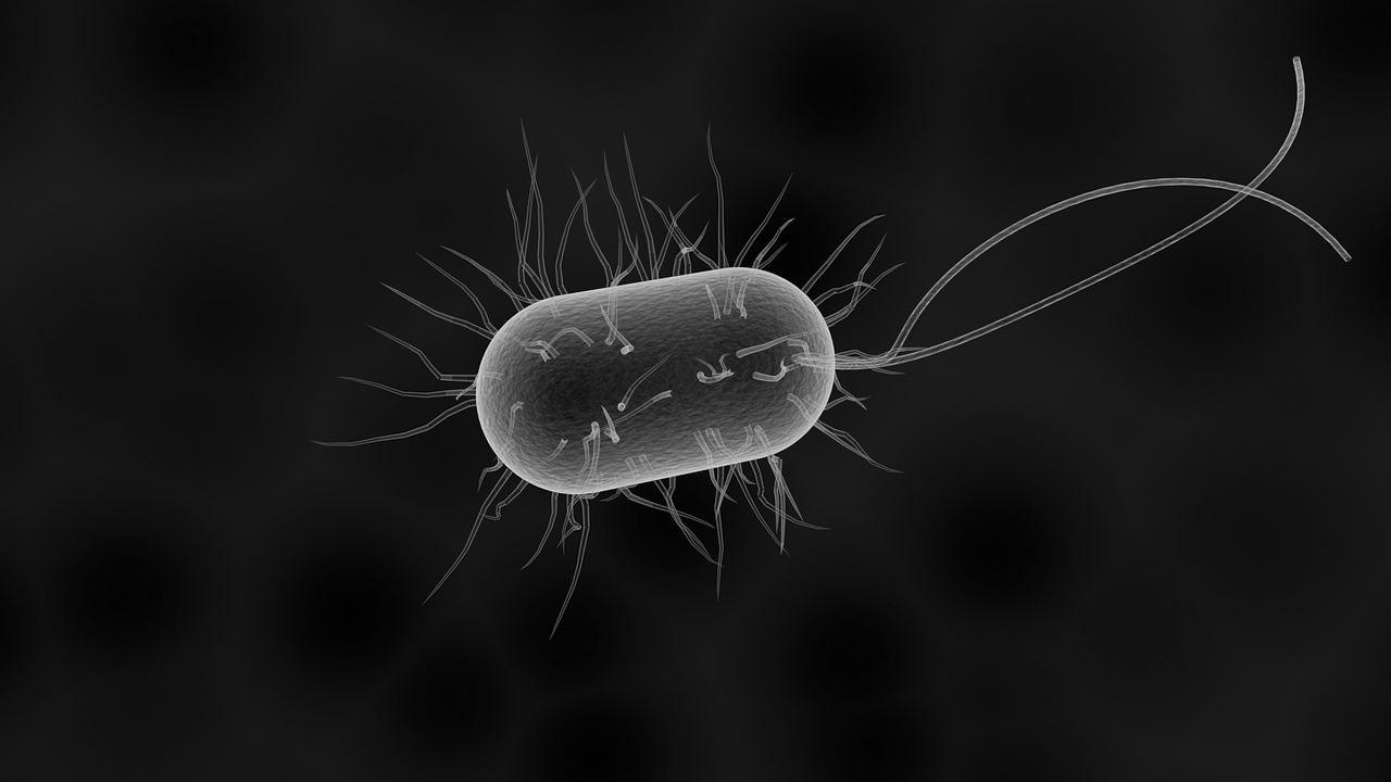 Detalles de Listeria Monocytogenes