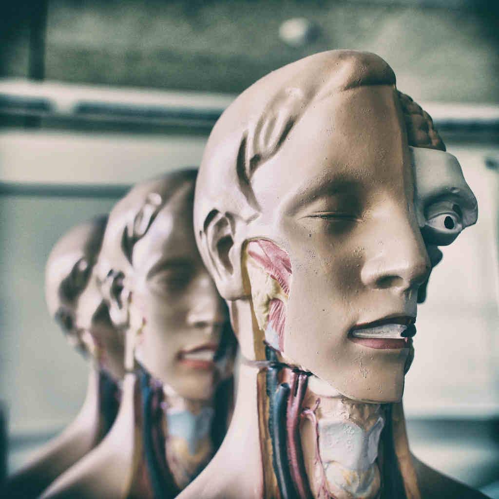 Estudio de generalidades de anatomía