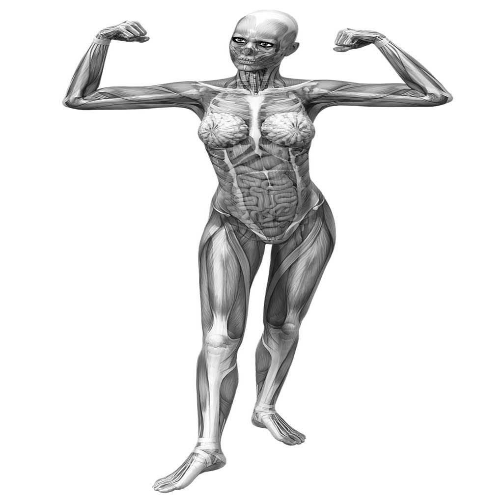 fisiología del cuerpo humano